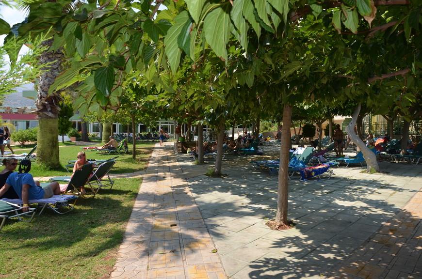 Это тутовые деревья, тут в основном отдыхают те, кто не хочет жариться на солнце