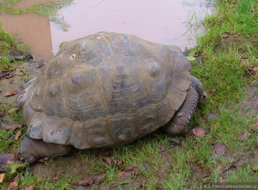 а этой черепахе больше 100 лет