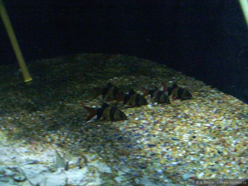 обитатели аквариума