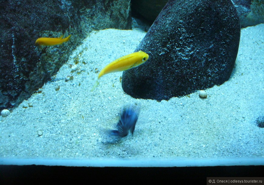 красивые рыбки в аквариуме