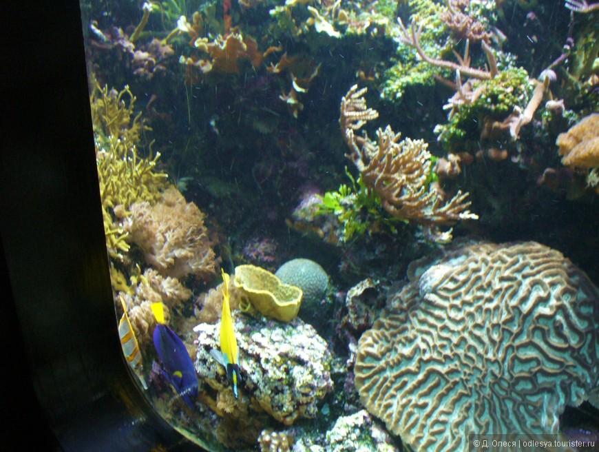 рыбки из мультика немо