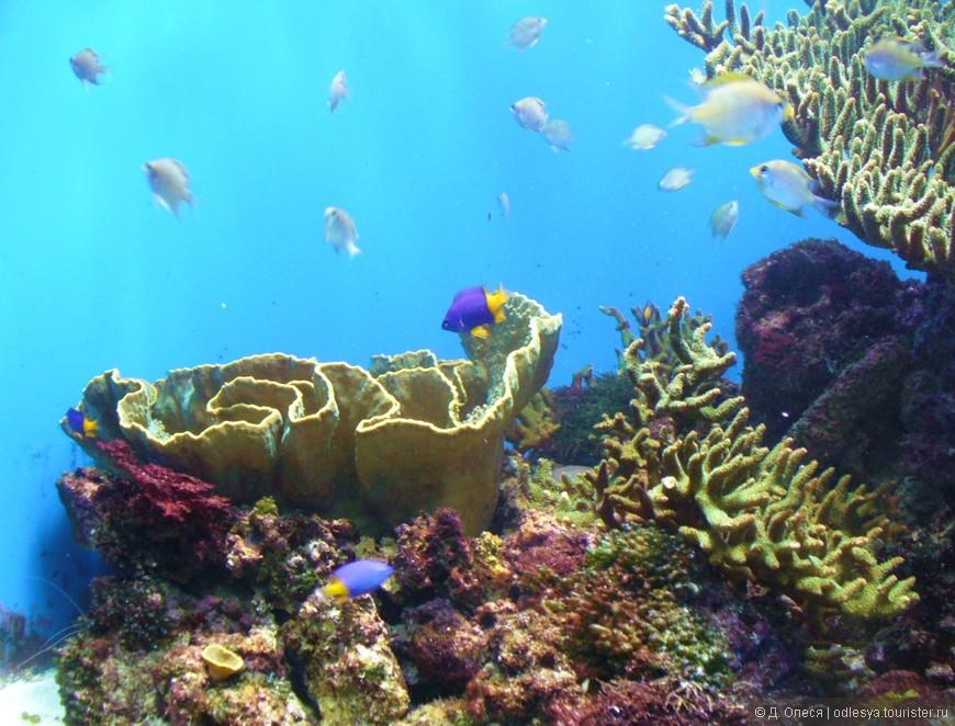 кораллы и рыбки