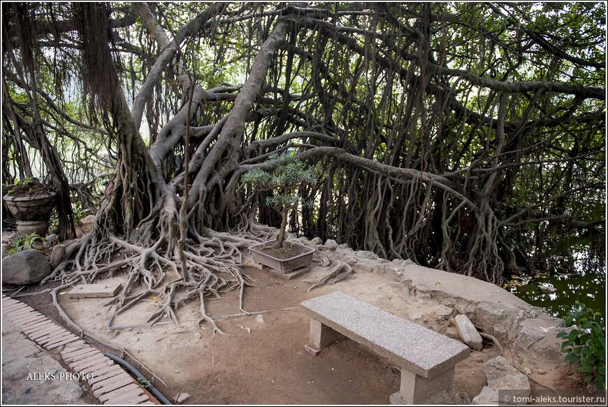 Такие деревья просто не могут не удивлять. У нас ведь они не растут. Будем считать, в шутку, что это - вьетнамская разновидность ивы, которая склонилась над водой.