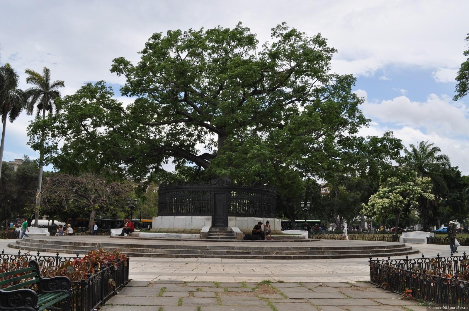 фото и названия деревьев кубы ургант