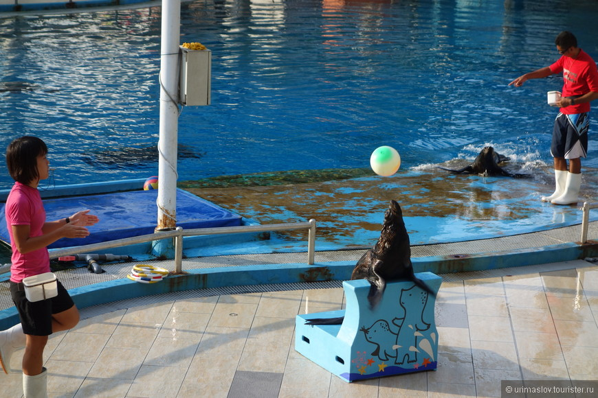 Сходили на шоу розовых дельфинов и морских львов. В принципе, как и в дельфинарии где-нибудь в Большом Утреше (Анапа), но всё равно тоже понравилось это шоу. Добротное.