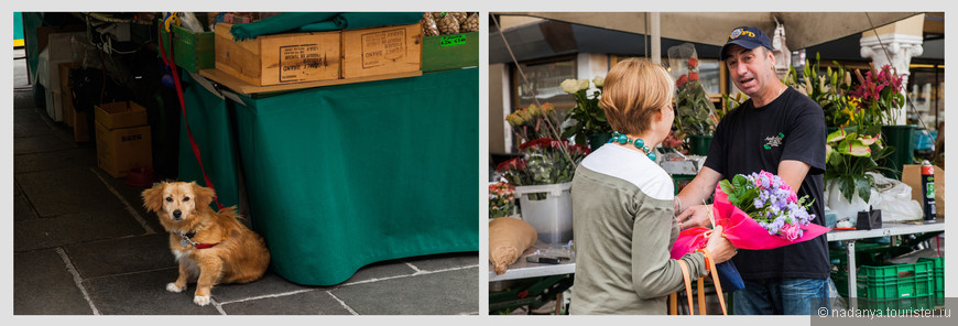 у палатки с орешками сидела милая собачка, а рядом женщина для себя для души или кому-то в подарок( в 11 утра,не уверена), покупала ооочень красивый букет.
