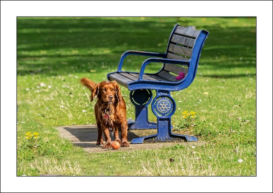 В Англии собака-наилучший друг человека!
