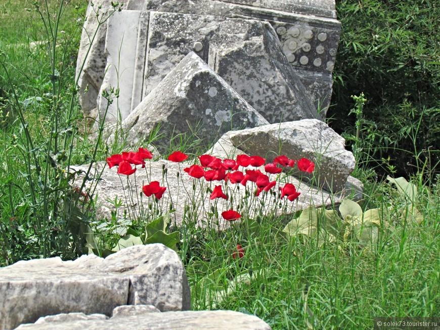 И на камнях растут цветы....