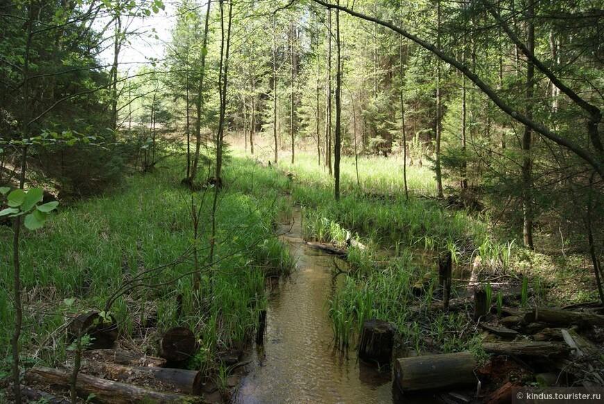 Безымянные сейчас, ранее эти ручьи были частью панской системы прудов.