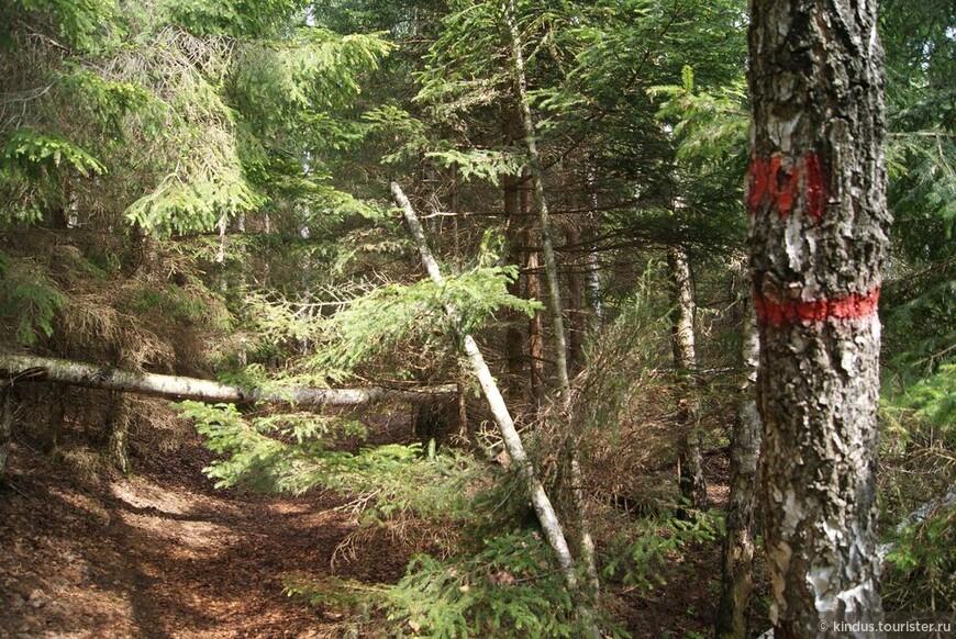 Лесные туристские тропы.