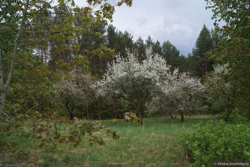 А сады продолжают цвести.