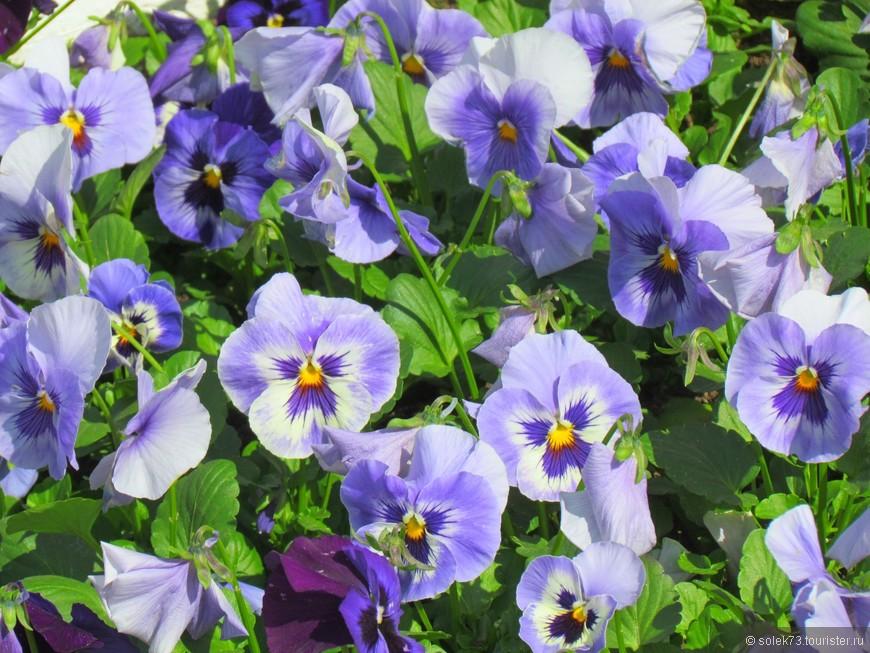 И везде цветы......что опять приятно удивило. Повторюсь , что монастырь мужской.