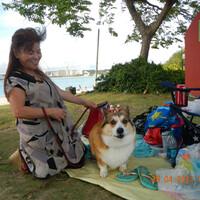 Вельш корги пемброк, любимая собака английской королевы, не меньше любима и на Гуаме. Обратите внимание на надпись выше - в общественном парке  призывают сохранять чистоту
