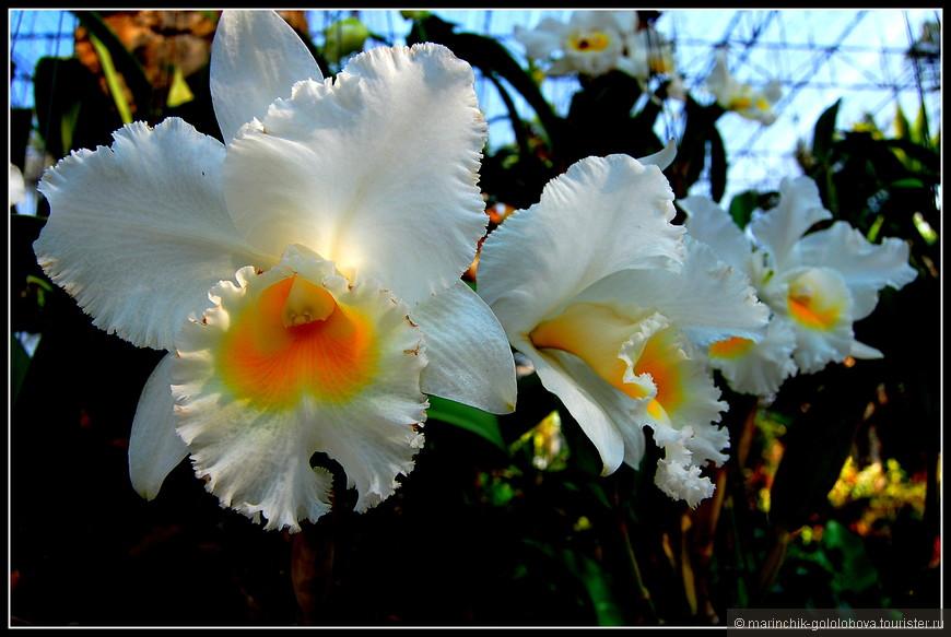 Сад орхидей и бромелиевых