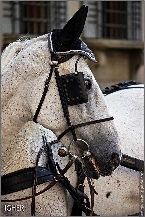 погладил лошадку по морде