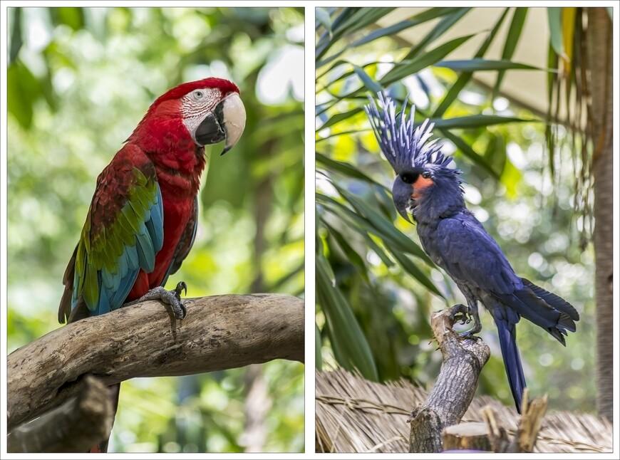 Малайзия очень богата красивыми,тропическими птицами.