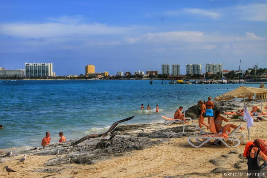 Кроме отдыхающих на пляже много чаек и игуан. Все они очень миролюбивы.