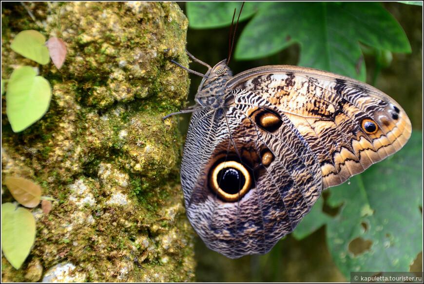 Бабочка     Butterfly    Fluture    Leptir    Sommerflug    Vlinder   Farfalla    Schmetterling   Perhonen  Motyl   Vlinder    Borboleta   Papillon   И еще много- много слов, обозначающих эту  порхающую красоту...