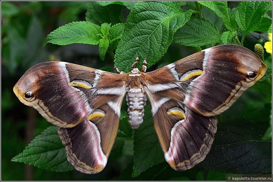 """В том же рекламном проспекте можно прочесть -  """"Вы когда нибудь видели, как рождается бабочка? """" или """"Вы бы хотели приобрести чудесный опыт и почувствовать, как 1000 бабочек летают вокруг Вас?"""" Конечно хотим!!!"""