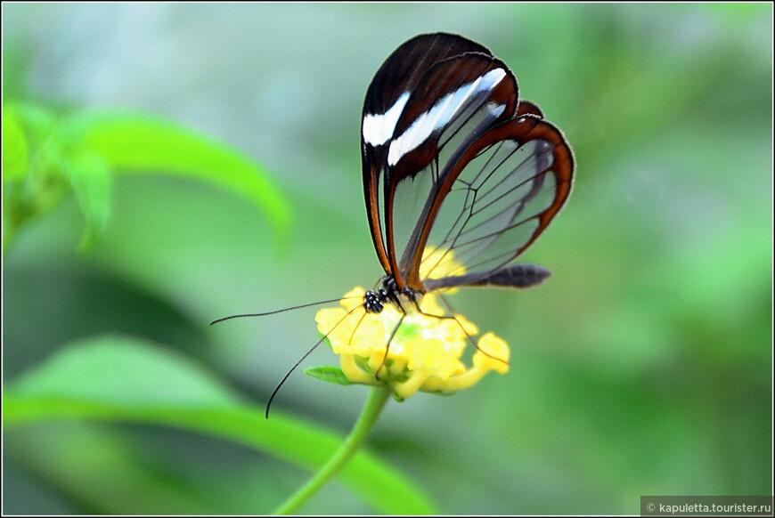 В Польше родители всегда запрещают детям убивать бабочек, поучая: «Не убивай бабочку — она тебя не тронет, а может, это твой покойный дедушка или бабушка». В некоторых местах Польши бабочек называют «диабел», «чертица»;