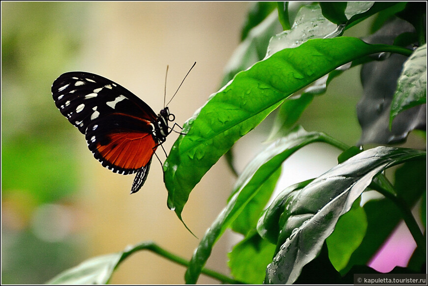 С глубочайшим почтением относятся к бабочкам буддисты: ведь к бабочке обратился Будда со своей предсмертной проповедью. Особым уважением пользуются в Азии ночные бабочки. Их считают душами умерших и хранителями живых. Здесь живёт легенда о потерявшем жену старике, который долго и безутешно плакал на её могиле, пока не прилетела огромная белая ночная бабочка и не унесла его в царство духов, где он и встретил умершую.