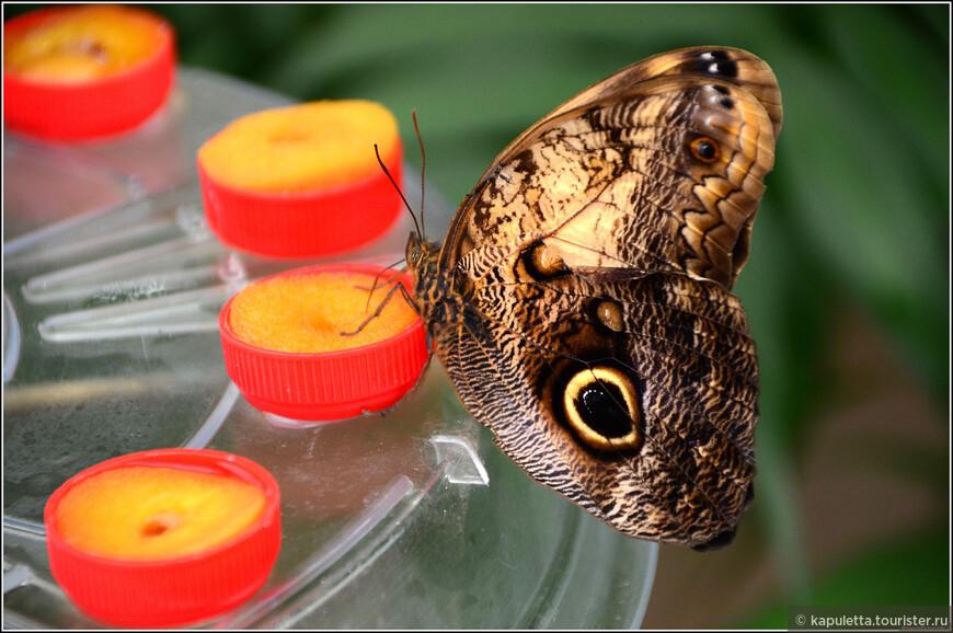 На крыльях бабочек расположены чешуйки, имеющие очень тонкие оптические структуры, которые взаимодействуют с ультрафиолетовой частью спектра, рождая краски, воспринимаемые глазом насекомого, но не видимые нами.