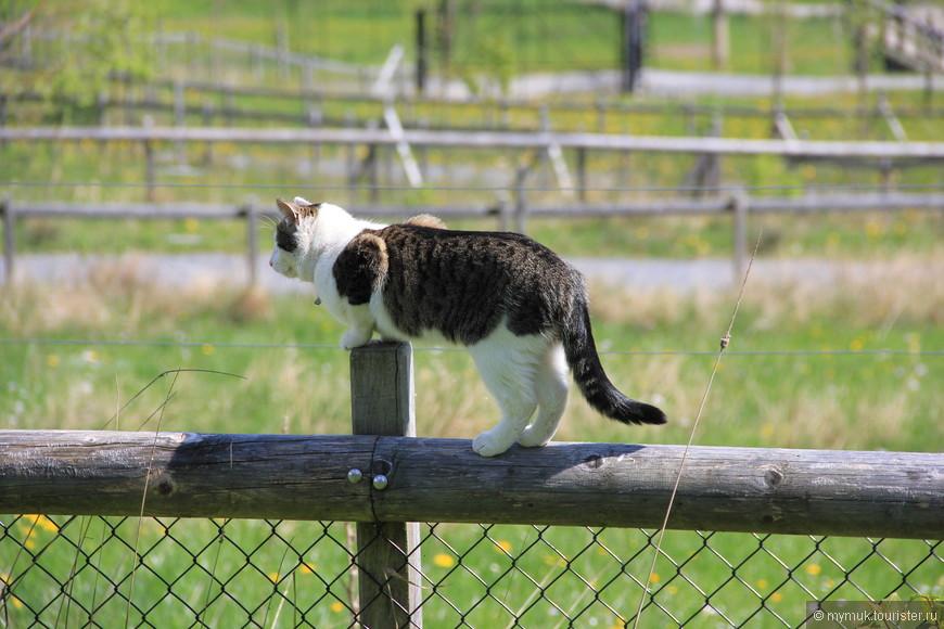 различные породы котов и кошек, которые с удовольствием подъедают кормешку местных обитателей