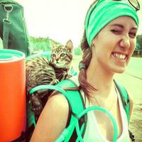 В Челябинске появился котенок-турист