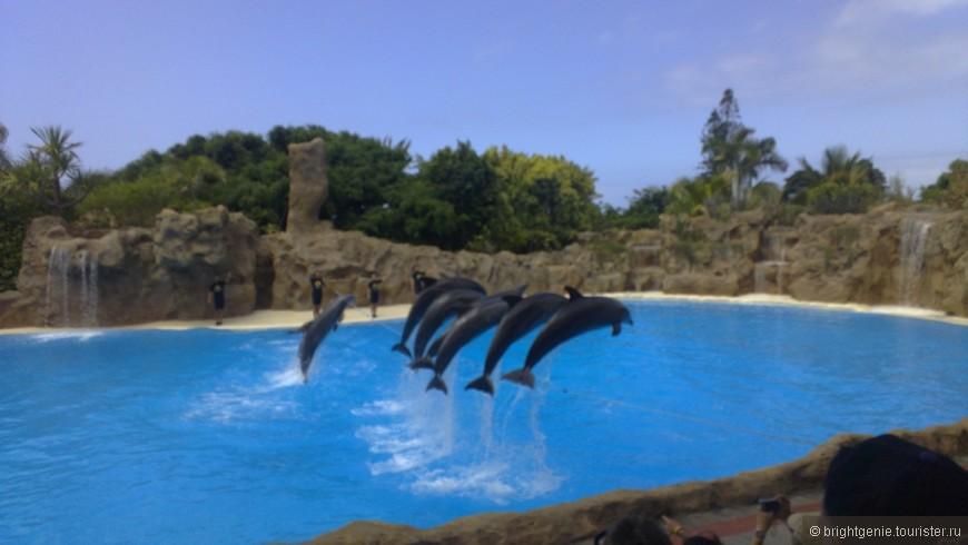 Loro Parque (Puerto de la Cruz). советую посетить: шоу дельфинов, шоу китов, шоу морских львов
