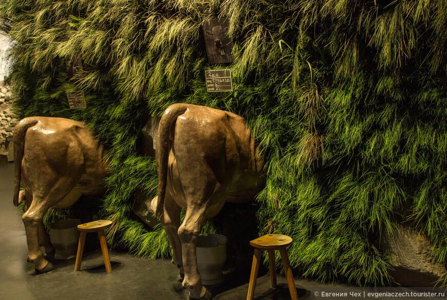 Мы сейчас в Альпах, в Швейцарии, Можно поучиться коров доить.