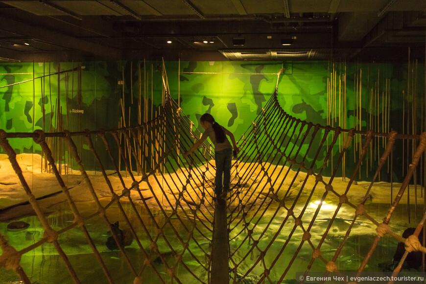 А это в тропической зоне, аквариум с типичными представителями. Можно побегать по подвесному мостику.