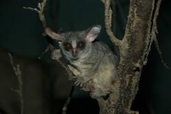 Зоопарк в городе Оломуц открыт для посетителей в вечернее время