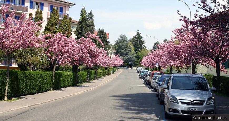 Маленькая улочка цветет, в городе Renens