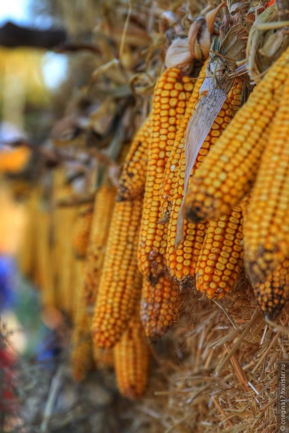 Кукурузное было лето. Вот и урожай богатый.