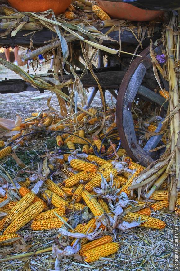 Урожая кукурузы даже телега не выдержала.