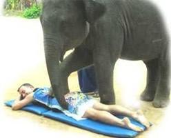 В Таиланде массаж делает слон
