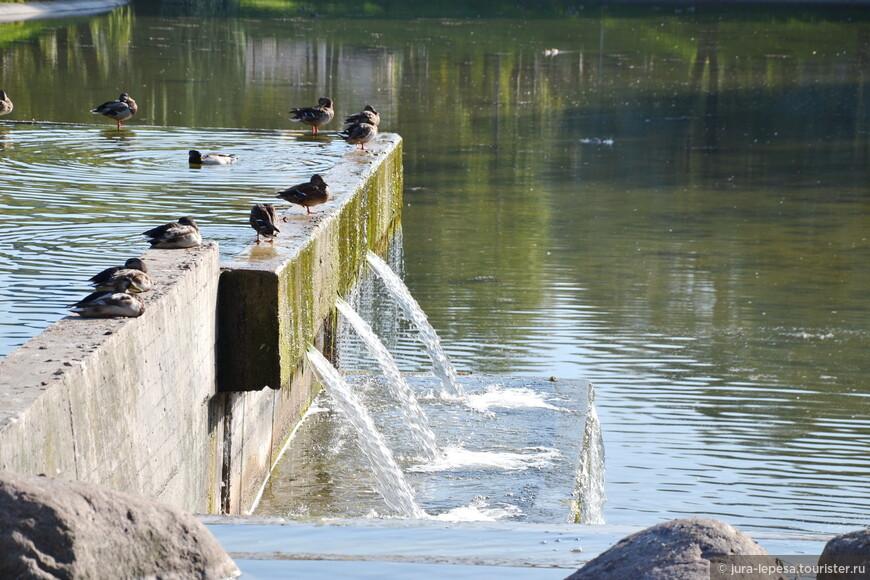 Слепянка в последние дни бабьего лета зачаровывает любого, кто сюда приехал. Умиротворенная гладь водохранилища, 13 водопадов, бесконечный плач ив – иногда создается такое впечатление, что это не Минск.