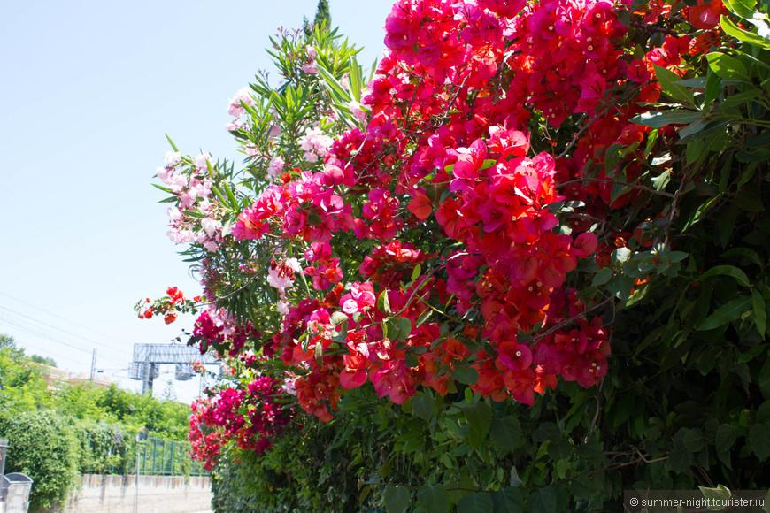 Благоухающая бурноцветущая растительность повсюду!