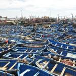 Сотни лодок в порту