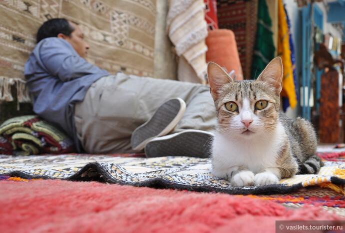 Эссуэйра — город кошек и таджинов