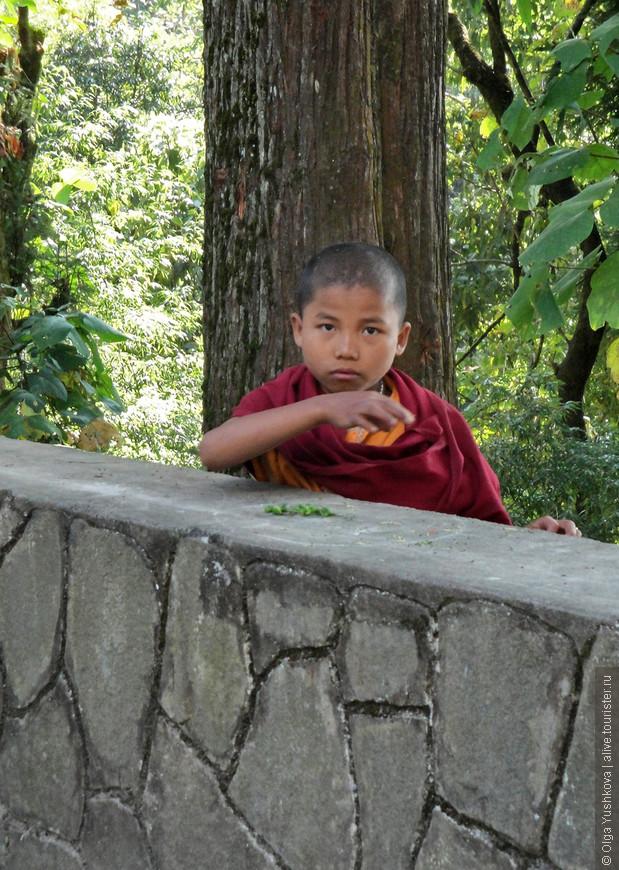 Окрестности и обитатели ещё одного буддийского монастыря в 3 км от Гангтока, столицы Сиккима.
