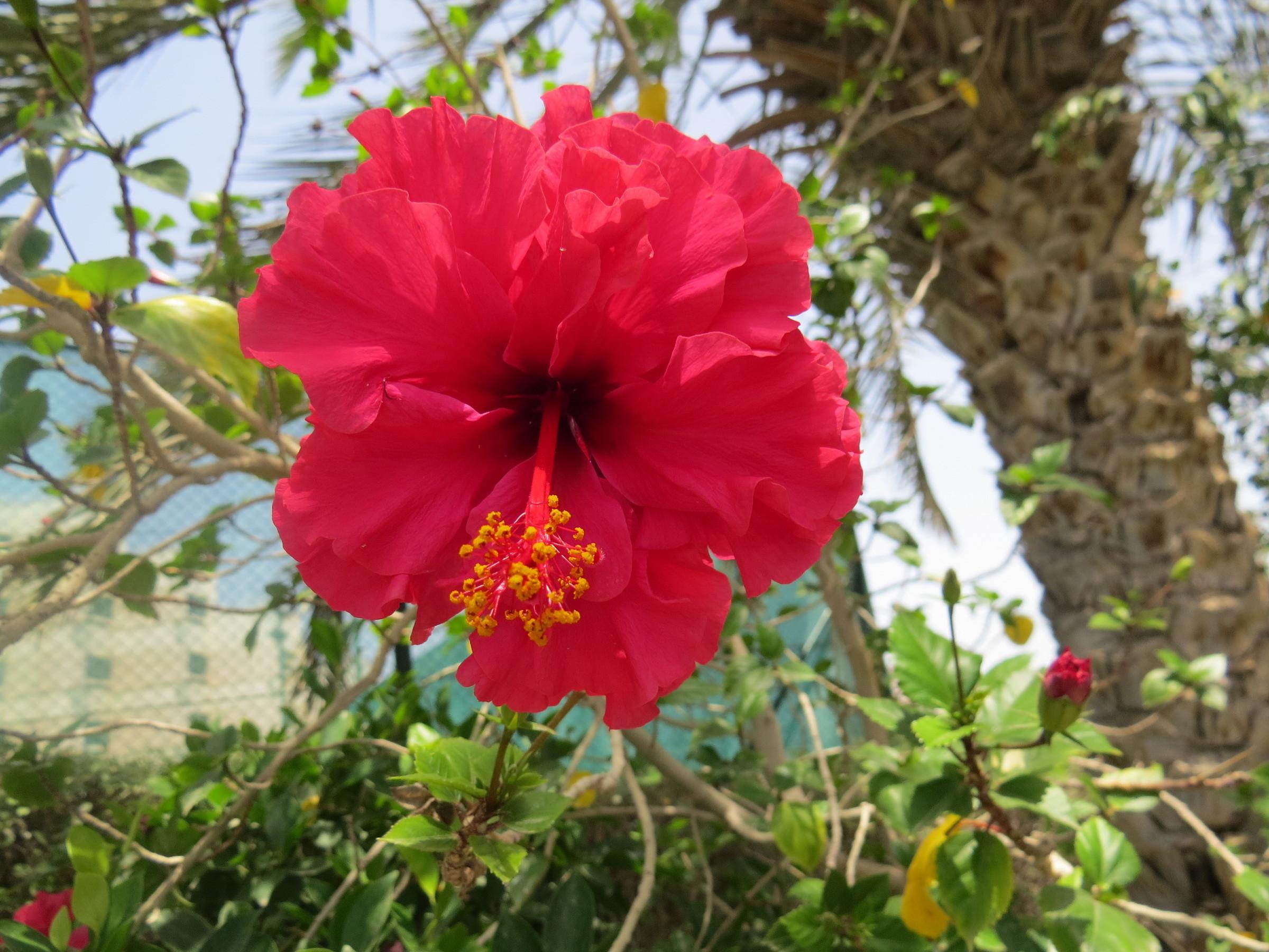 Показать фото и название цветов для сада