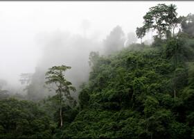 Даже в Википедии про эту столицу совсем мало информации.  Малабо (исп. Malabo) (до 1973 года город назывался Санта-Исабель) — столица Экваториальной Гвинеи. Расположена в северной части острова Биоко (или Фернандо-По) у подножья затонувшего вулкана. Малабо является главным коммерческим и финансовым центром республики. В нём расположен один из самых глубоких портов в регионе, в док которого может входить несколько кораблей. В основном экспортируются какао, лес и кофе.