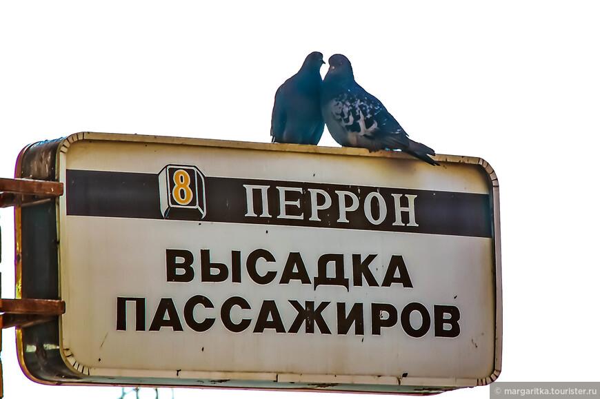 на перроне вас встречают голуби!!!