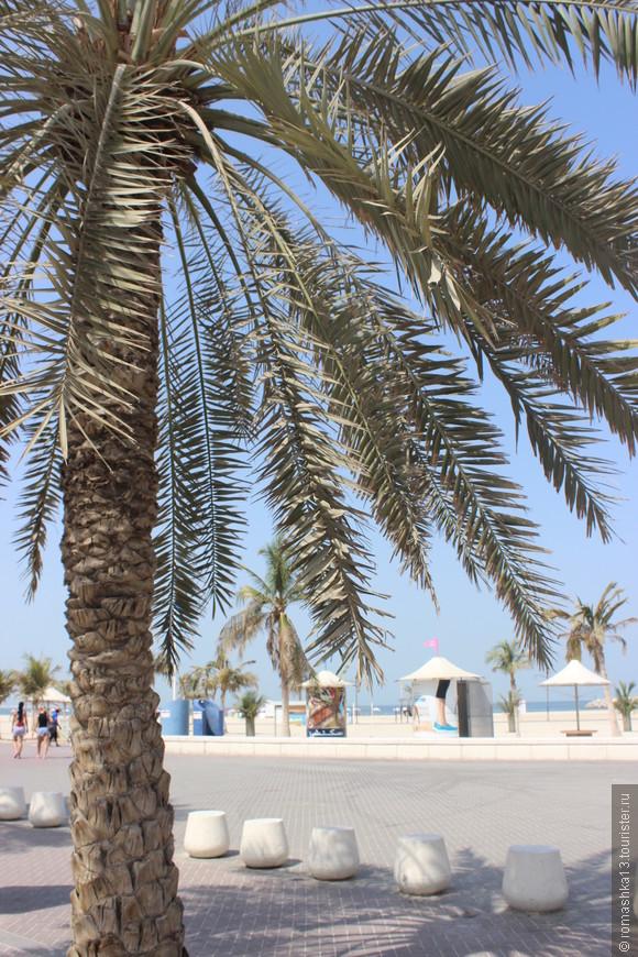 Пальмы, они и в Африке пальмы.