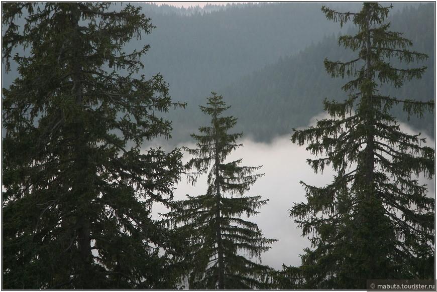 Утренний туман. 6 утра. Начало треккинга на высочайшую горную вершину Черногории - Боботов кук.