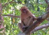 Экскурсии в джунгли Таиланда