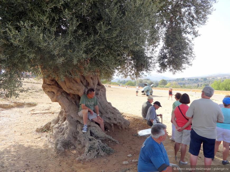 Привал под оливой в Долине Храмов