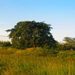 Сады Ухуру