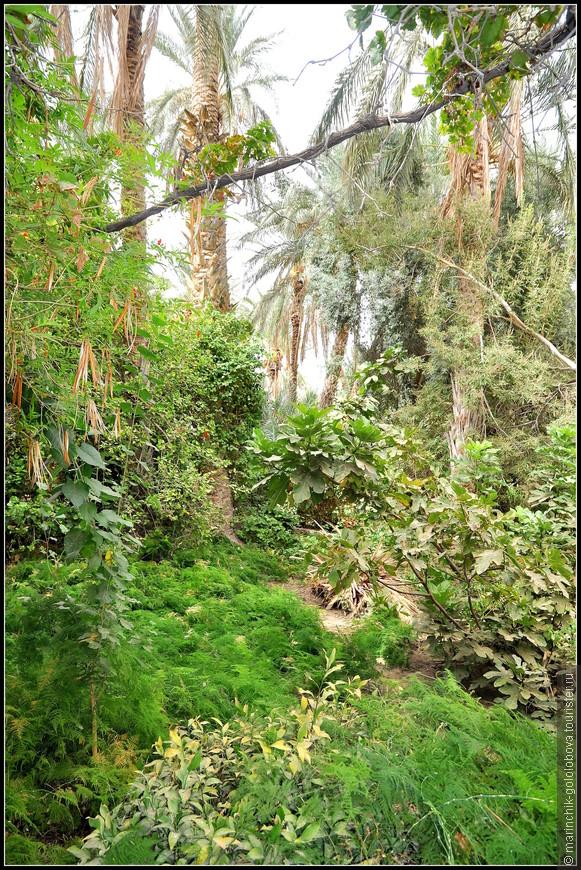 Оазисы - особая достопримечательность пустыни Сахара. Жители Туниса тщательно защищают оазисы от песка